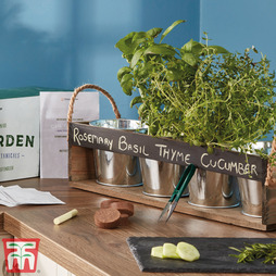 Gin Garden Seed Kit - Gift