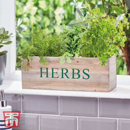 Windowsill Herb Garden Gift Set - Gift