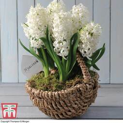 Hyacinth White Willow Basket - Gift