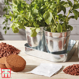 Herb Trio Grow Kit - Gift
