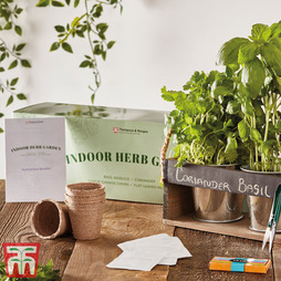 Indoor Herb Garden Seed Kit - Gift