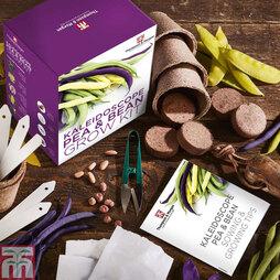 Kaleidoscope Pea & Bean Growing Kit