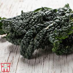 Kale 'Black Kale'