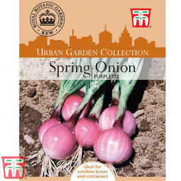 Spring Onion 'Purplette' - Kew Collection Seeds