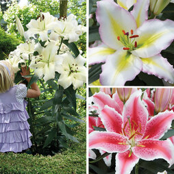 Tree Lily® 'Pretty Woman Collection'