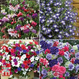 Lucky Dip Hanging Basket Plant Collection