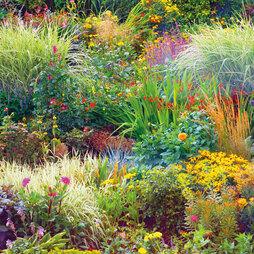 Nurserymans Choice Seasonal Perennial Border