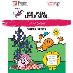 Mr. Men™ Little Miss™ Salvia patens