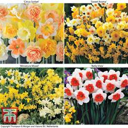 Narcissus Ultimate Collection