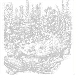 Lettuce 'Webbs Wonderful' (Iceberg/Crisphead)