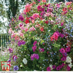 Nurserymans Choice Hanging Basket Mixed Collection