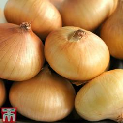 Onion 'Borettana'