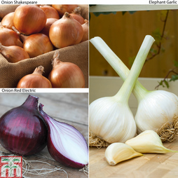 Onion and Garlic Saver Collection