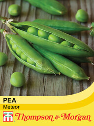 Pea 'Meteor' (First Early)