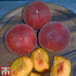 Peach 'Garden Lady'