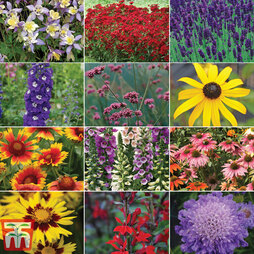 Perennial 'Best Value' Collection