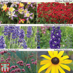 Perennial Pack A 'T&M's Choice'