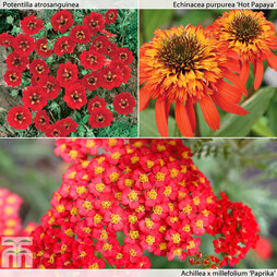 Perennial Red Hot Collection