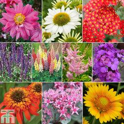 Nurserymans Choice Cottage Garden Perennials