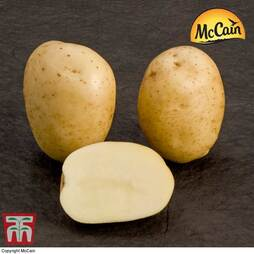 Potato McCain 'Premiere'