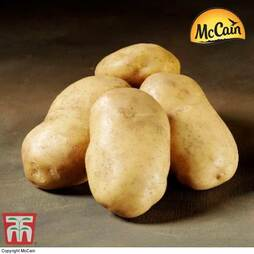 Potato McCain 'Royal'