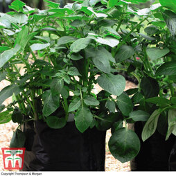 Black/Grey Potato Growing Bags