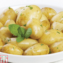 Potato 'Jazzy'
