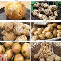 Potato 'Allotment Favourites Collection'