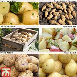 Potato 'Customer Favourites Collection'