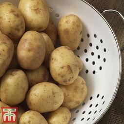 Potato Caledonian Pearl