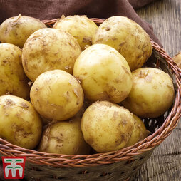 Potato Foremost