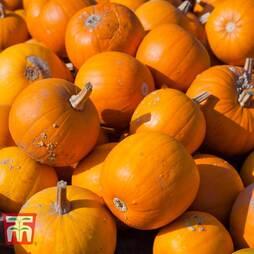 Pumpkin 'Jack o' Lantern'