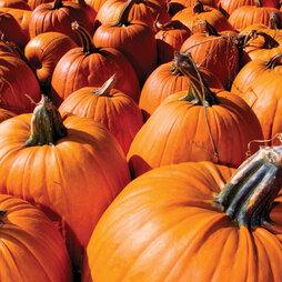 Pumpkin 'Racer'
