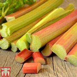 Rhubarb 'Delight' (Spring/Autumn Planting)