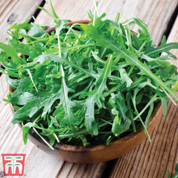 Salad Leaves 'Rocket'