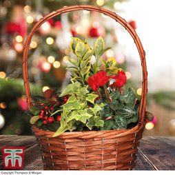 Red Christmas Mixed Planter - Gift