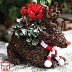 Festive Sitting Rudolph Brushwood Pot & Cyclamen