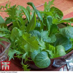 Salad Leaves 'Oriental Mix'