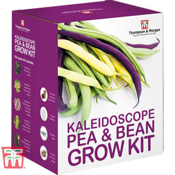 Kaleidoscope Pea & Bean Growing Kit - Gift