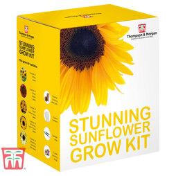 Stunning Sunflowers Growing Kit - Gift