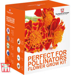 Pollinator Flowers Growing Kit - Gift