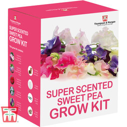 Super Scented Sweet Pea Growing Kit - Gift