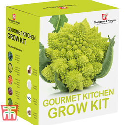 Gourmet Kitchen Growing Kit - Gift