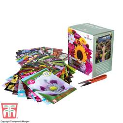 Flower Seed Box Bumper Pack