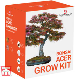 Bonsai Acer Growing Kit - Gift