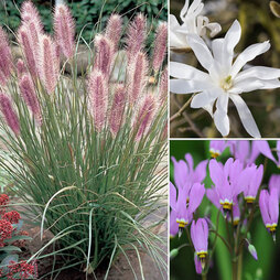 Nurserymans Choice Shrubs