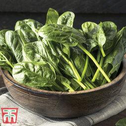 Spinach 'Monnopa'