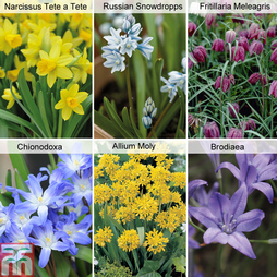 150 Spring Flowering Bulbs