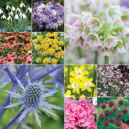 Spring Plant & Bulb Collection
