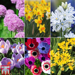 100 Free* Spring Flowering Bulbs